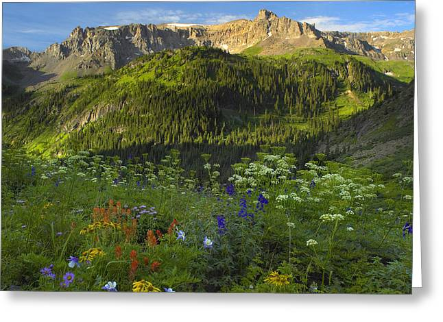 Orange Sneezeweed And Indian Paintbrush Greeting Card by Tim Fitzharris
