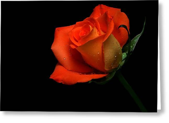 Tangerines Greeting Cards - Orangette Greeting Card by Doug Norkum