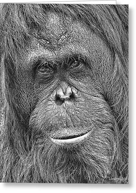 Orangutan Portrait Greeting Card by Larry Linton