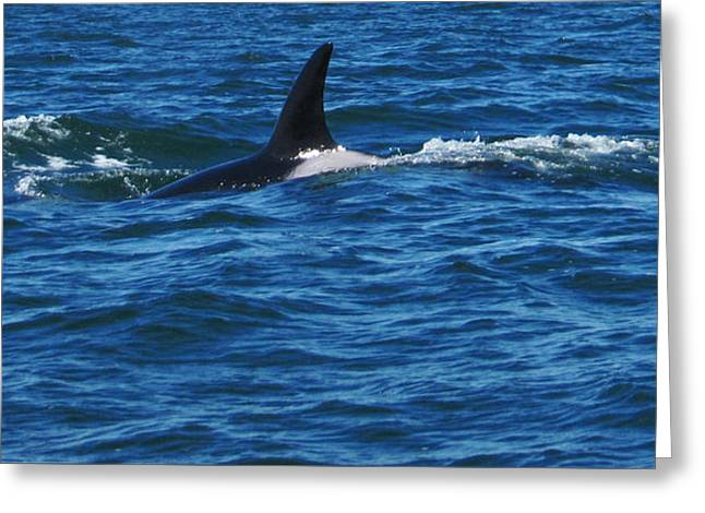 Ocean Mammals Greeting Cards - Orca in the Wild Greeting Card by Leena Kewlani
