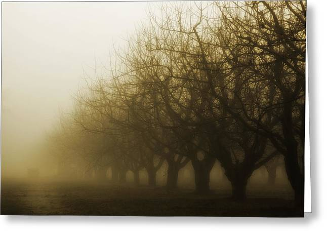 Orchard in Fog Greeting Card by Rebecca Cozart