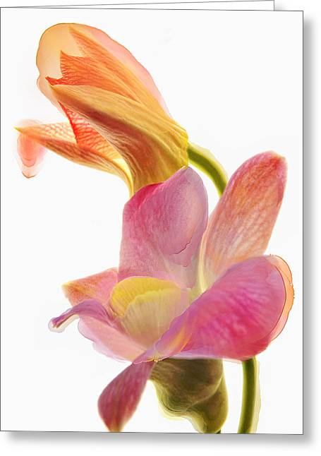 Orchid Morphing II Greeting Card by Leda Robertson