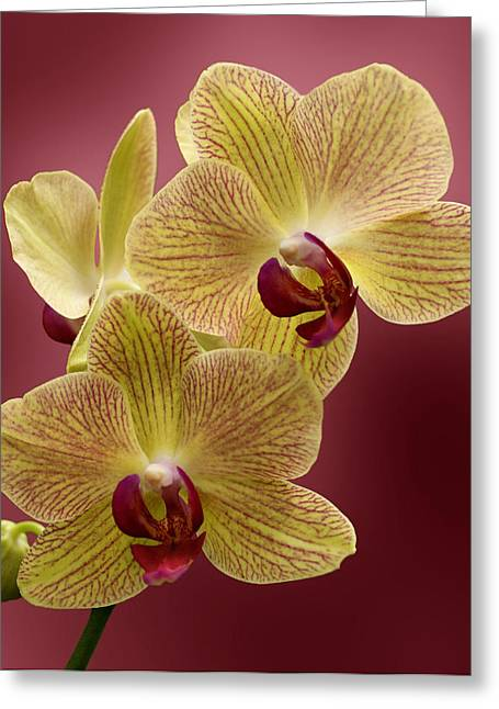 Sandy Keeton Photography Greeting Cards - Orchid Greeting Card by Sandy Keeton