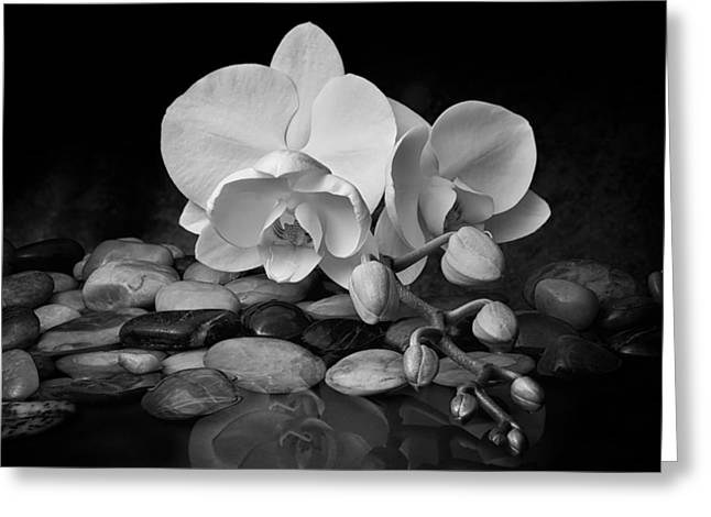 Innocence Greeting Cards - Orchid - Sensuous Virtue Greeting Card by Tom Mc Nemar