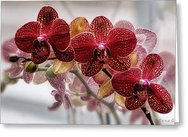 Cultivation Digital Art Greeting Cards - Orchids Greeting Card by OLena Art