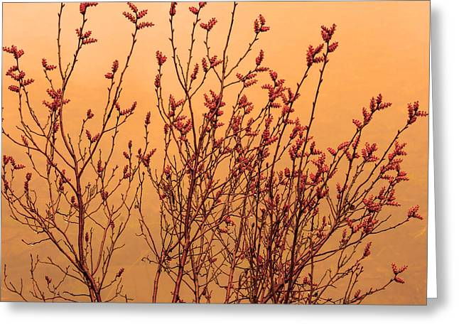 Watermark Greeting Cards - Our plants in bloom Greeting Card by Toppart Sweden