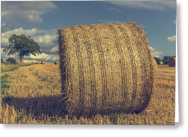 Bales Photographs Greeting Cards - Outstanding in its field Greeting Card by Chris Fletcher