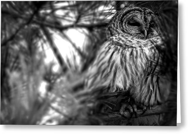 Lovely Owl Greeting Cards - Owl In A Tree Greeting Card by William Stewart