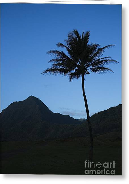 Best Sellers -  - Pastureland Greeting Cards - Palm and Blue Sky Greeting Card by Dana Edmunds - Printscapes