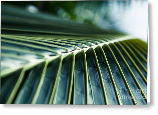 Niu Greeting Cards - Palm Dreams Greeting Card by Sharon Mau