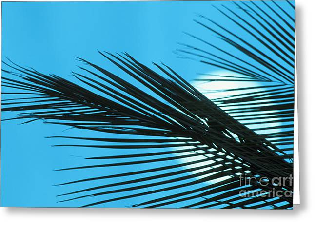 Moonrise Greeting Cards - Palm Frond Silhouette Greeting Card by Ron Dahlquist - Printscapes