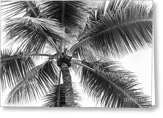 Frond Greeting Cards - Palm tree Greeting Card by Elena Elisseeva