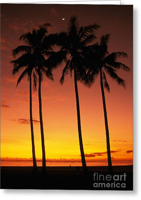 Ala Moana Greeting Cards - Palms At Sunset Greeting Card by Mary Van de Ven - Printscapes