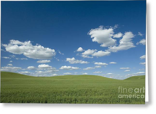 Northwestern Us Greeting Cards - Palouse Country, Usa Greeting Card by Jean-Louis Klein & Marie-Luce Hubert