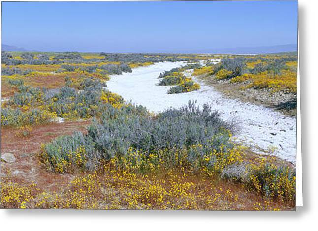 Rural Landscapes Greeting Cards - Panoramic View Of White Salt And Desert Greeting Card by Panoramic Images