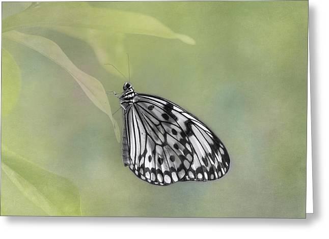 Kite Greeting Cards - Paper Kite Butterfly Greeting Card by Kim Hojnacki