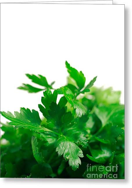 Foliage Fragrance Greeting Cards - Parsley Greeting Card by Gaspar Avila