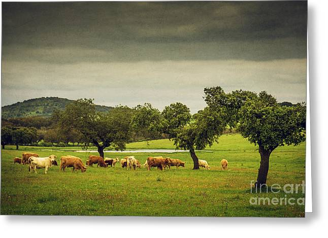 Olives Greeting Cards - Pasturing Cows Greeting Card by Carlos Caetano