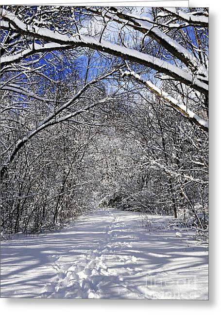 Winter Scenery Greeting Cards - Path in winter forest Greeting Card by Elena Elisseeva