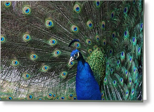 Period Pyrography Greeting Cards - Peacock Beauty Greeting Card by Valia Bradshaw