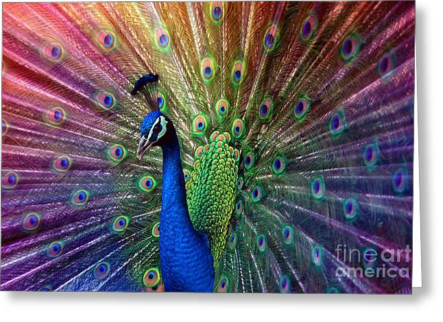 Hannes Cmarits Greeting Cards - Peacock Greeting Card by Hannes Cmarits