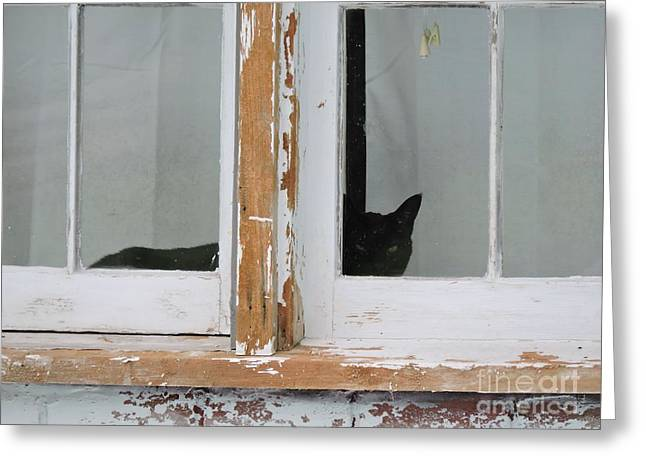 House Pet Greeting Cards - Peek-A-Boo Greeting Card by Beth Williams