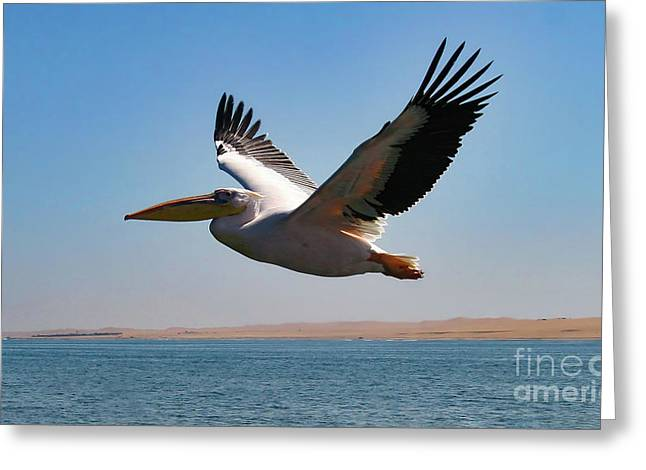 Pelican Greeting Card by Stephen Smith