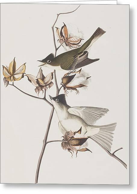 Flycatcher Greeting Cards - Pewit Flycatcher Greeting Card by John James Audubon