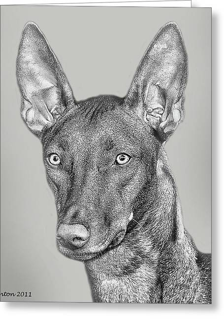 Pharaoh Digital Greeting Cards - Pharaoh Hound Greeting Card by Larry Linton
