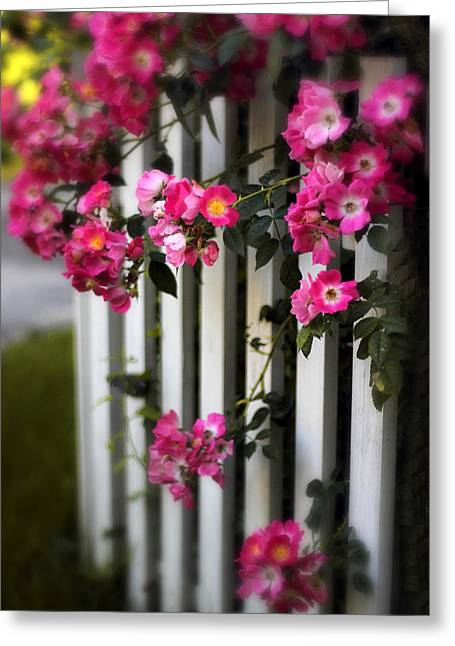 Fence Greeting Cards - Picket Fence Roses Greeting Card by Jessica Jenney