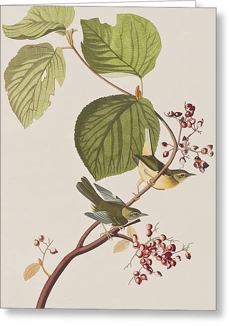 Pine Swamp Warbler Greeting Card by John James Audubon