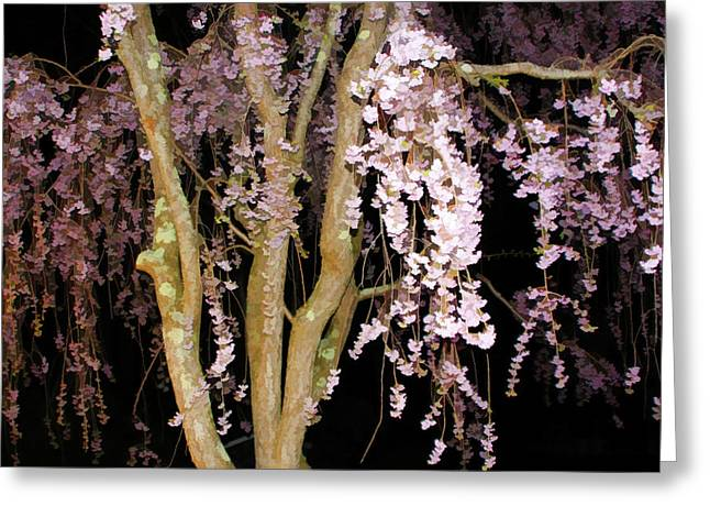 Weeping Greeting Cards - Pink Blossoms Cascading In The Night Greeting Card by Daphne Sampson