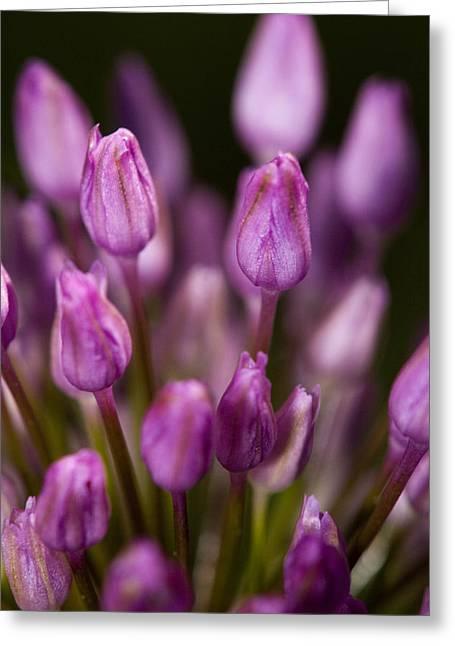 Jouko Mikkola Greeting Cards - Pink flower Greeting Card by Jouko Mikkola