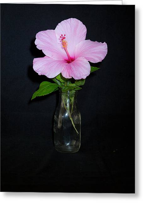 Artistic Photography Greeting Cards - Pink Hibiscus Greeting Card by Darrell Hutto