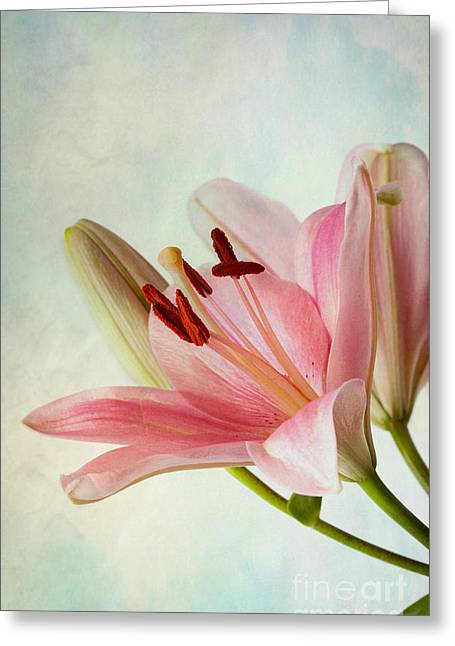 Vibrant Photographs Greeting Cards - Pink Lilies Greeting Card by Nailia Schwarz