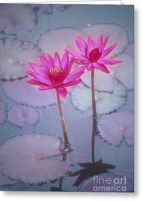 Nature Center Pond Greeting Cards - Pink Lily Blossom Greeting Card by Ron Dahlquist - Printscapes