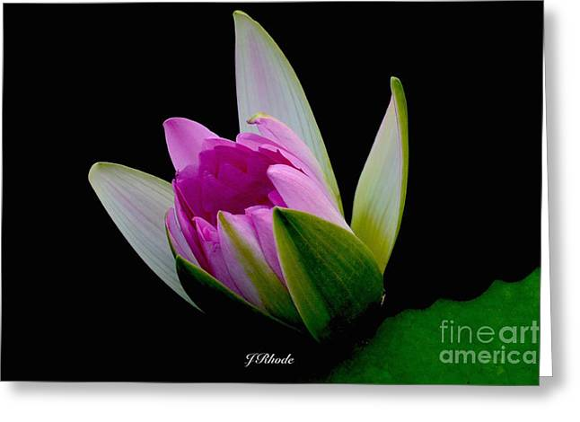 Aquatic Greeting Cards - Pink Pearl Greeting Card by Jeannie Rhode Photography
