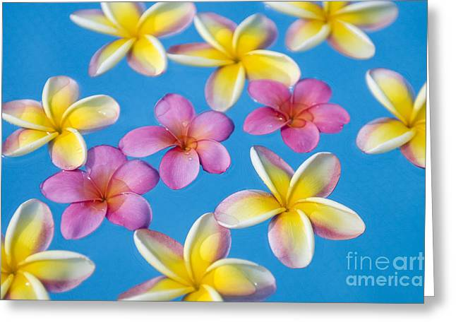 Moist Greeting Cards - Plumerias Floating Greeting Card by Ron Dahlquist - Printscapes