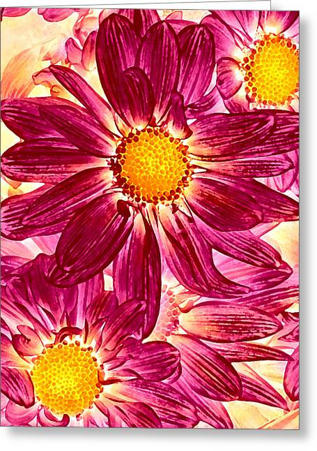 Flower Design Greeting Cards - Pop Art Daisies 14 Greeting Card by Amy Vangsgard