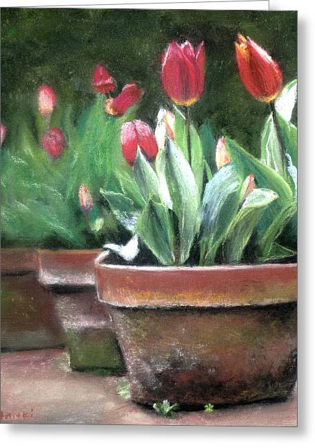 Potted Tulips Greeting Card by Cindy Plutnicki