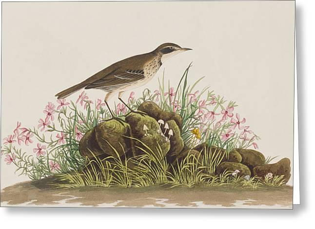 Prairie Titlark Greeting Card by John James Audubon