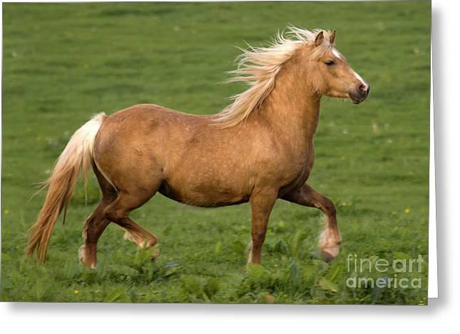 Prancing Pony Greeting Card by Angel  Tarantella
