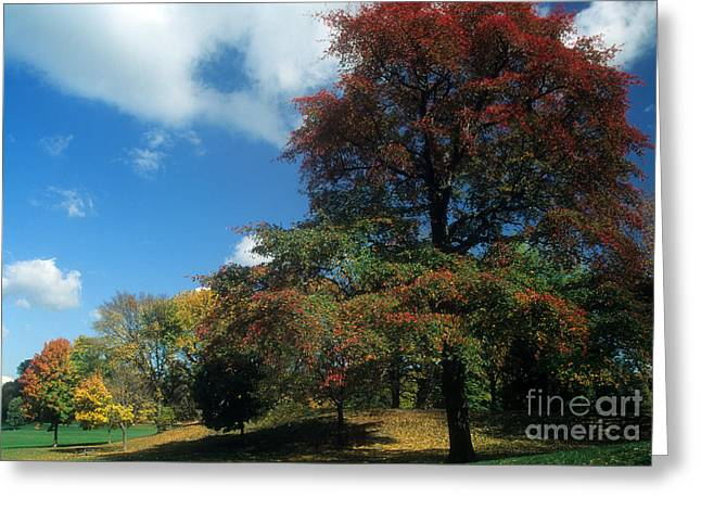 Best Sellers -  - Prospects Greeting Cards - Prospect Park Greeting Card by Mark Gilman