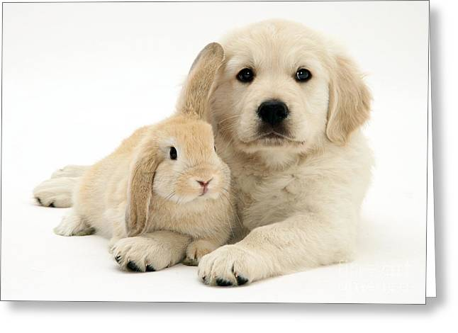 Puppy And Bunny Greeting Card by Jane Burton