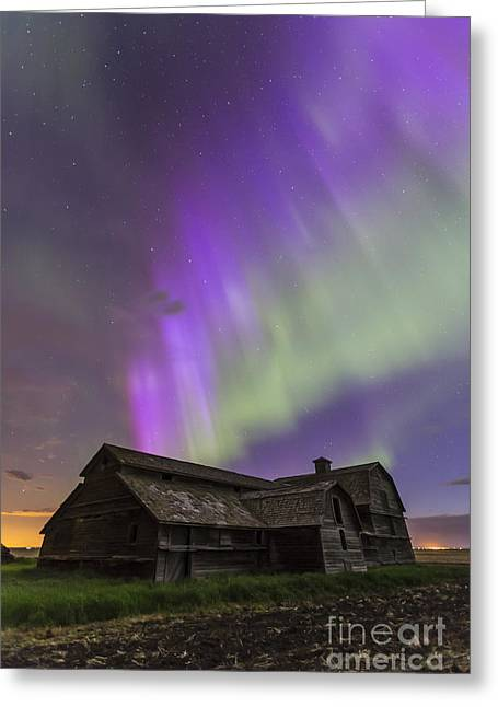 Old Barns Greeting Cards - Purple Aurora Over An Old Barn Greeting Card by Alan Dyer
