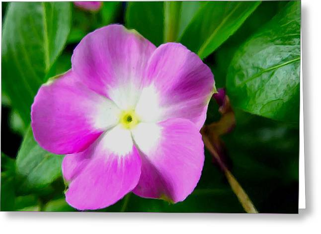 Watercress Greeting Cards - Purple Periwinkle flower 1 Greeting Card by Lanjee Chee