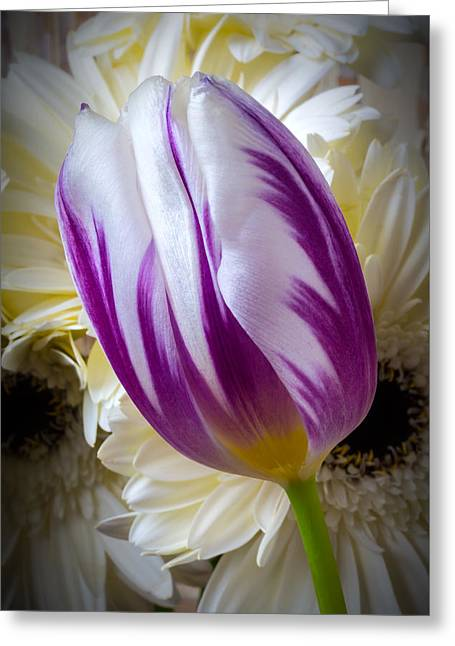 Purple White Tulip Greeting Card by Garry Gay