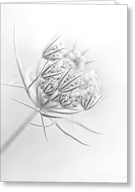 Daucus Greeting Cards - Queen Annes Lace Flower Buds Monochrome Greeting Card by Jennie Marie Schell