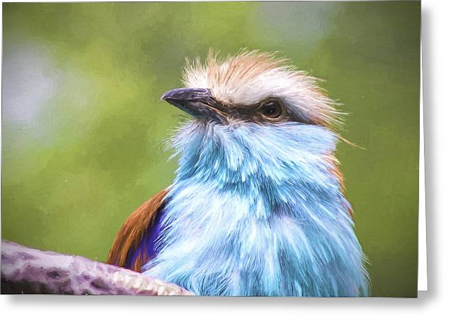 Racquet Greeting Cards - Racket Tailed Roller Greeting Card by Ron Grafe