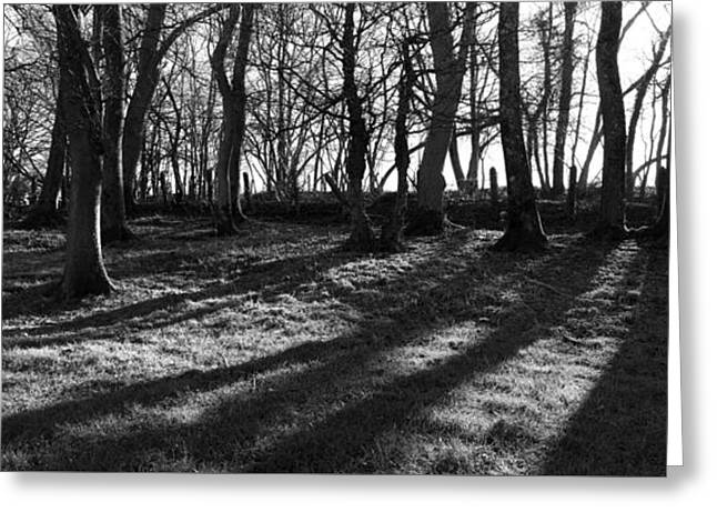 Best Seller Greeting Cards - Railway Trees Greeting Card by Jon Delorme